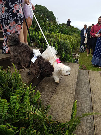 Marry Me Marilyn Katie & Jacob Wedding Summergrove Estate Carool NSW_Dogs
